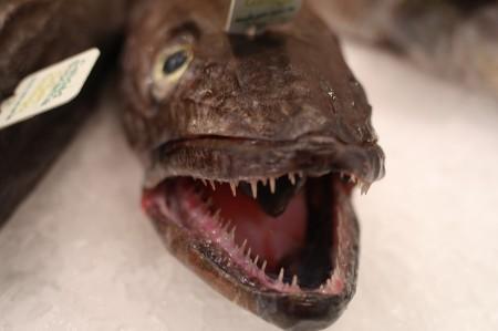 Fresh Barracuda Fish