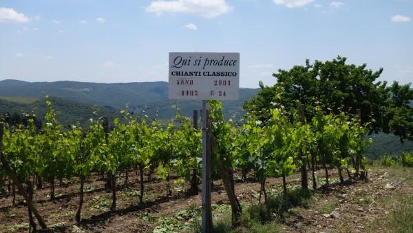 Chianti Wine district, Italy
